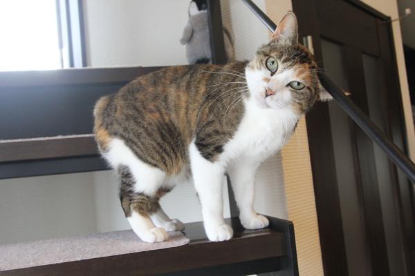 猫と暮らす家 新築住宅